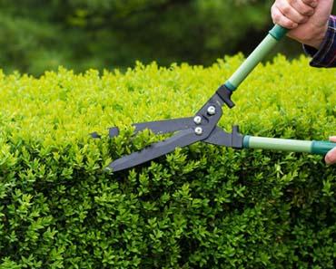 Empresa de jardinagem para condomínios