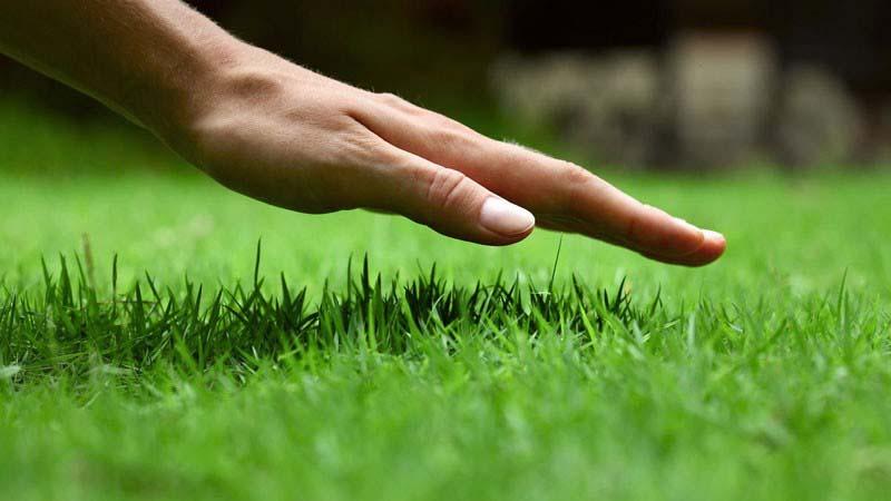 Terceirização de serviços de jardinagem